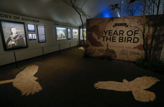 Wonders of Wildlife unveiled its newest exhibit, The Year of the Bird, a joint presentation by WOW, Ducks Unlimited and the National Audubon Society on Tuesday, Aug. 28, 2018. The exhibit, which will be on display at least through the end of the year, features prints of Audubon's original bird paintings, interactive displays that let visitors learn about migration routes and bird species and some relics from commercial hunting's past.