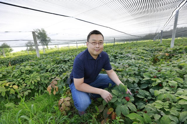 Wisconsin ginseng tariffs pressure growers to expand new