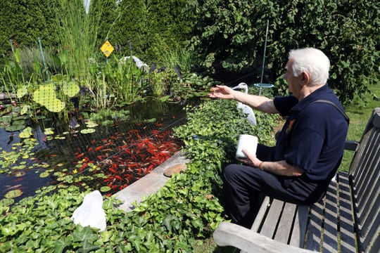 Dr. Ian Wetherly feeds the goldfish in his garden Aug. 28, 2018 at home in Congers. Dr. Wetherly, 80, recently retired after 52 years of running the Haverstraw Animal Hospital.