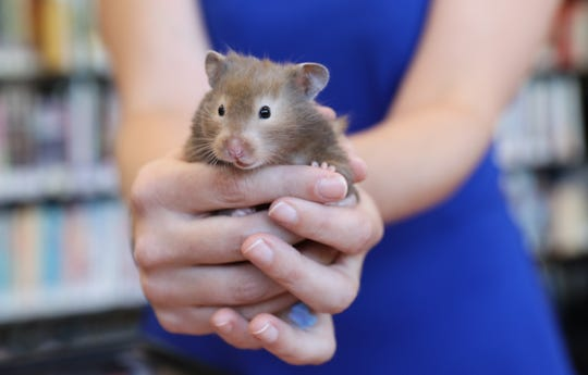 Kim Carletta, head of youth services holds Jasmine the hamster at the Orangeburg library on Wednesday, August 29, 2018.