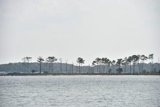 View of a area of shoreline in the Rehoboth Bay.