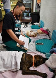 Kari Banahan monitors dogs as they come out of anesthesia after surgery at P.E.T.S. Spay and Neuter Clinic. Texoma Gives is September 13 and P.E.T.S. is one of the non-profits the day of giving benefits.