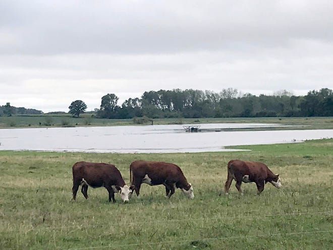 State agriculture officials are warning livestock producers and feed mills to be alert to the risks of flood water contamination and mold in corn, soybeans and forage crops.