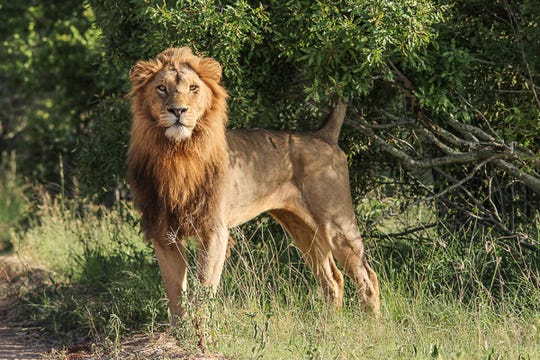The world's most majestic creatures are waiting for you in South Africa.