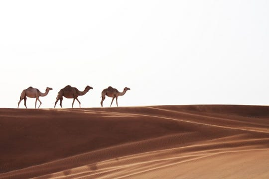 Take in the stunning sights of Dubai and Abu Dhabi for less.