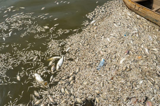 Harmful algae blooms seized the waters of the Indian River Lagoon, blotting out the sun and choking off oxygen to marine life.