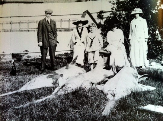 Small-toothed Sawfish, Sewall's Point, 1916. Historically reported from 18-28 feet, they were once extremely common in the Indian River Lagoon.