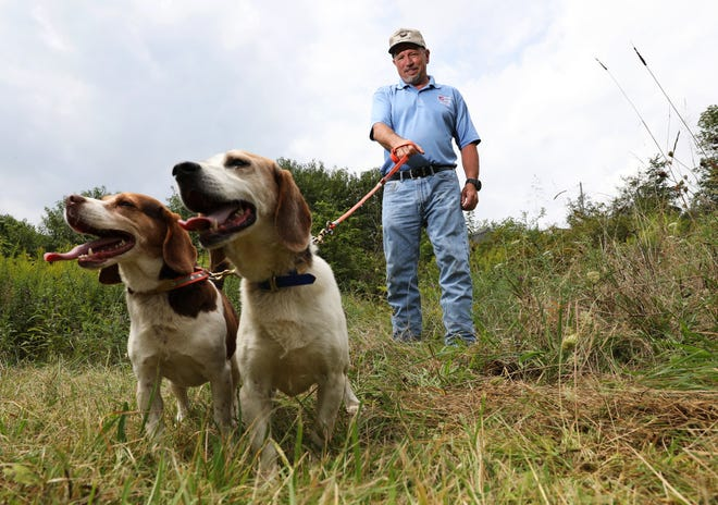 Dave McVay, pictured with two of his UKC World Champion beagles, Gauge VIII, left, and Sundown Willie Brown, will host the Don McVay Sr. Memorial Beagle Hunt starting on Sept. 6th. The McVay family has been hosting the event for 16 years.