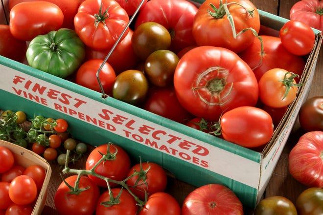 Tomatoes attract fruit flies. What to do? (Michael Tercha/Chicago Tribune/TNS)