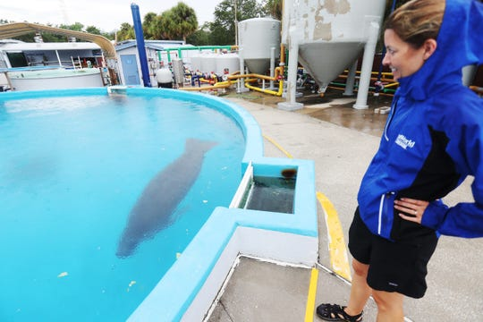 Dr. Lydia Staggs a Sea World veterinarian overlooks a holding area for recovering manatees. The manatees are from Southwest Florida and are recovering from the effects of red tide poisoning.
