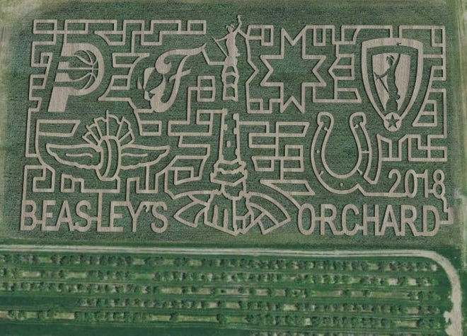 Circle City Sports corn maze at Beasley's Orchard in Danville.
