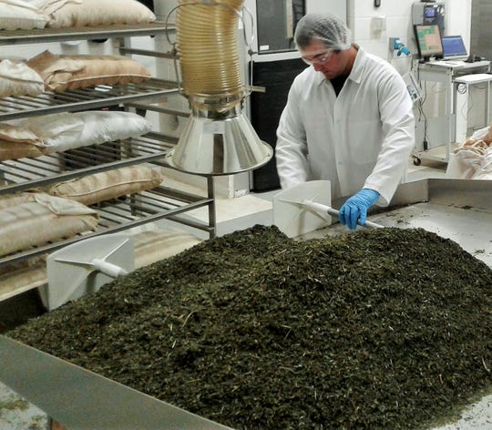 Nettle leaves were scooped into special cotton bags last week by Austin Czerwiec in preparation for steam pasteurization at the Frontier Co-op plant in North Liberty.