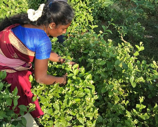 Frontier Co-op partners with this jasmine grower shown tending her crops in India.  Raw materials from 50 countries end up in its North Liberty plant for warehousing and processing.