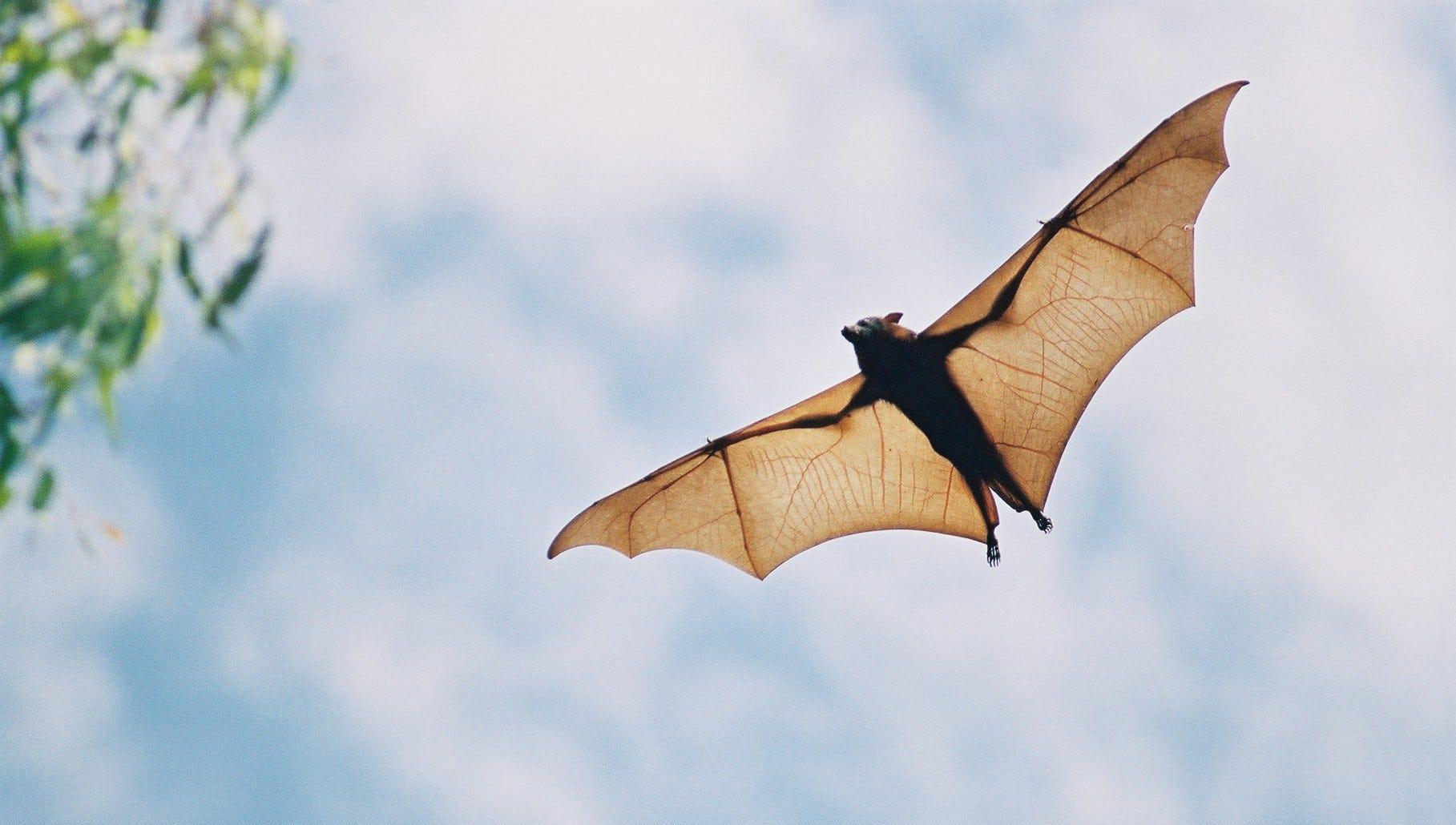 Las Palmas area bat tests positive for rabies