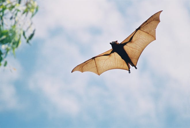 "Hearn Elementary School in Frankfort, Kentucky, was closed Thursday ""as a safety precaution"" after a bat that tested positive for rabies was found on the school's playground earlier this week."