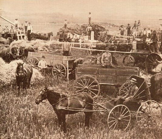 Threshing Photo
