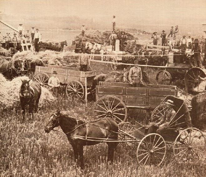 Circa 1920, threshing crew pictured with wagons, buggy, teams, steam engine and combines.