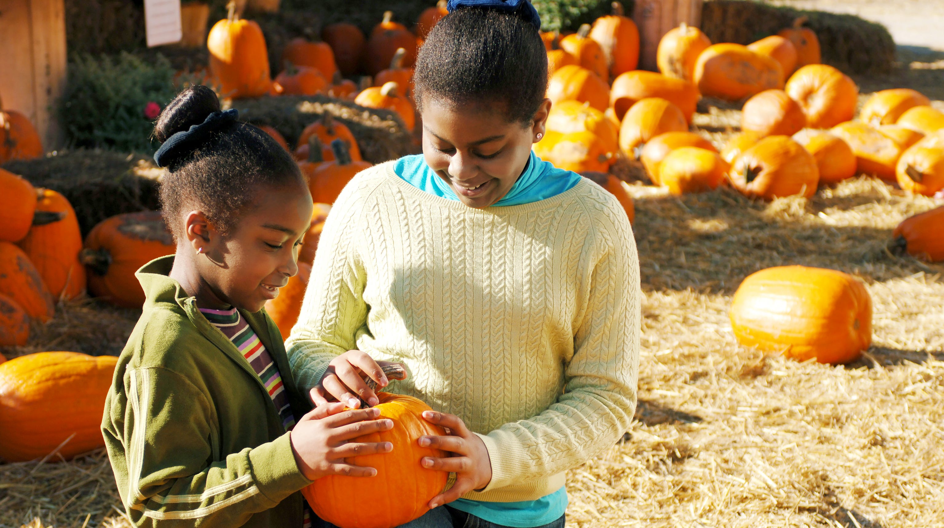 Pumpkin patches are a fall tradition perfect for