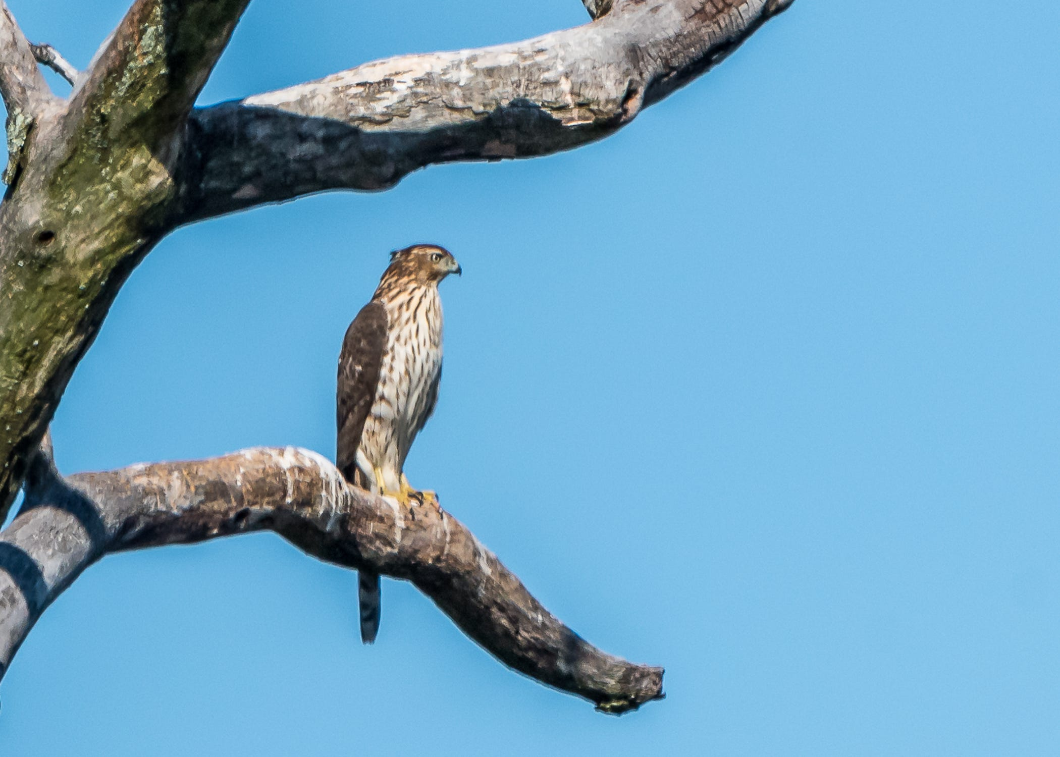Bird Watcher Here Are Three Great Places To See Hawks
