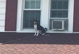 A dog sits on the roof of a Verona home Aug. 28, 2018.
