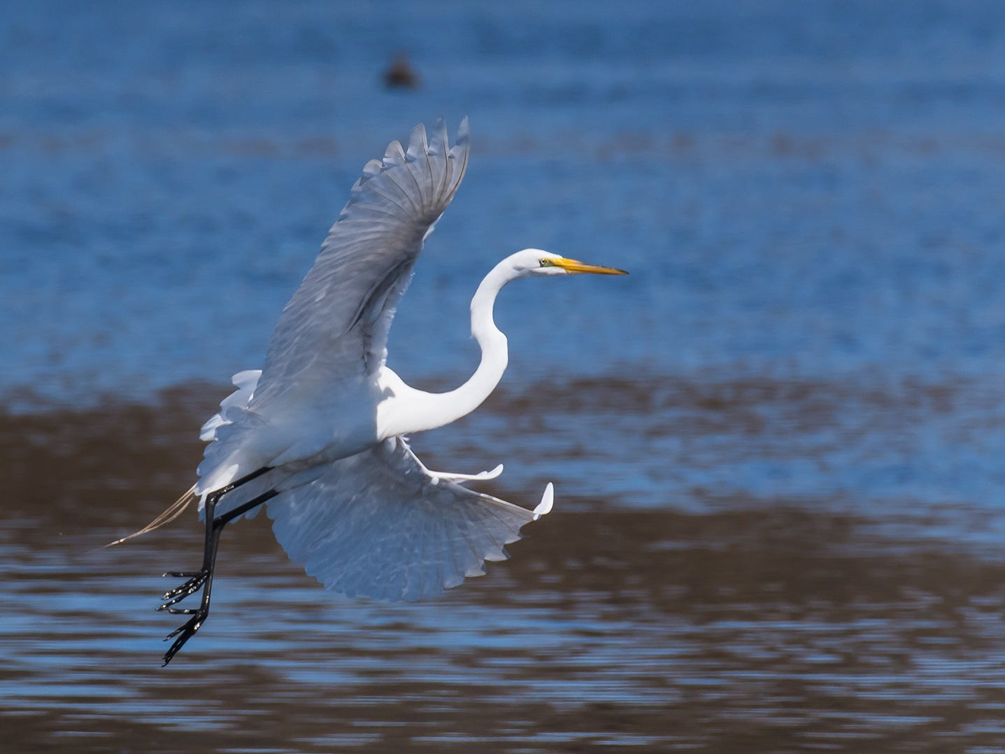 The Meadowlands Birding Festival will be held on Sept. 15 at Meadowlands Environment Center in Lyndhurst.