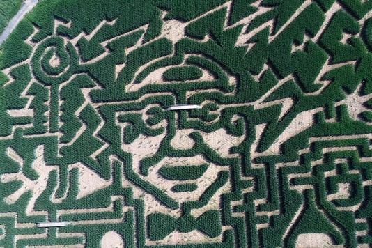 Corn Mazes Near Me Best Nj Corn Mazes To Visit This Fall