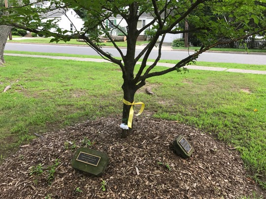 One of the memorial trees that would be cut down if the River Edge council approves plans for a $2.6 million community center project.