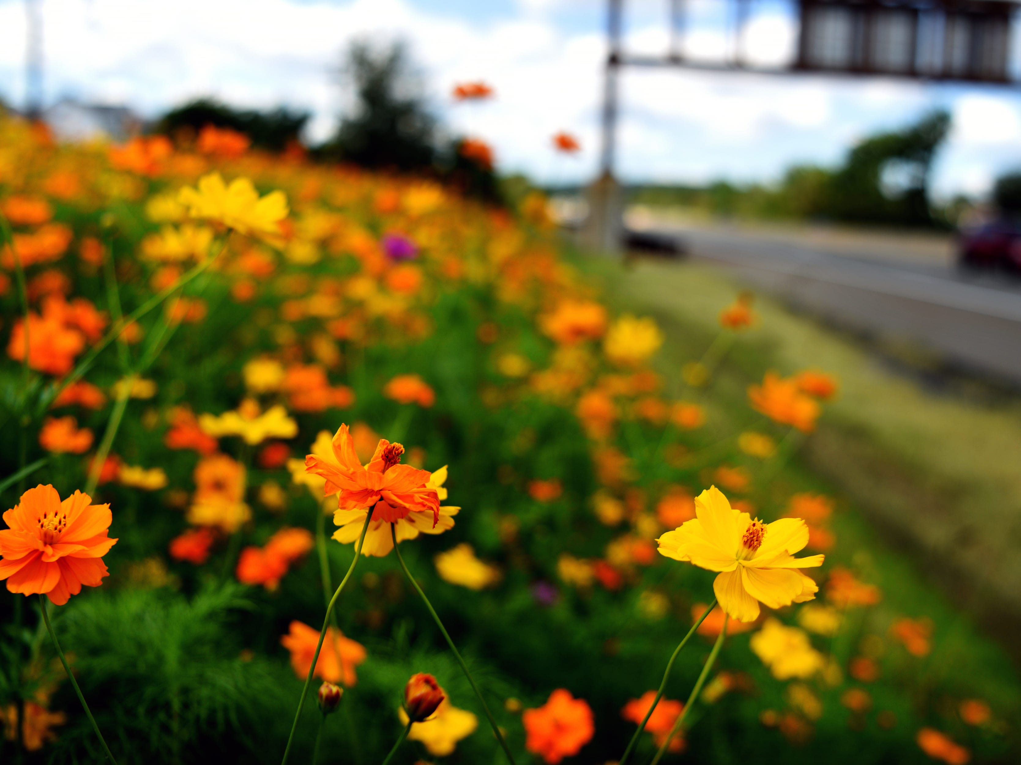 North Jersey highways in bloom: Roadside assistance to pollinators