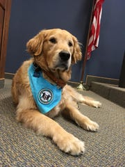 Bruin, the newest member of the St. Clair County Prosecuting Attorney Victims Rights office, sits in Judge Michael West's courtroom while it is empty Thursday.