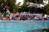 The X-Treme Air Dogs Open Dock Diving Competition at the Oregon State Fair in Salem on Thursday, Aug. 30, 2018.