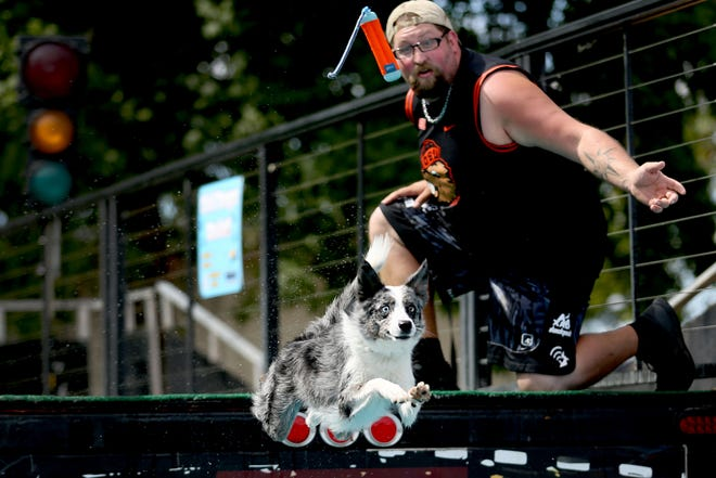 Talise, a border collie, goes after a training bumper thrown by Josh Callaway, of Alpine, during the X-Treme Air Dogs Open Dock Diving Competition at the Oregon State Fair in Salem on Thursday, Aug. 30, 2018.
