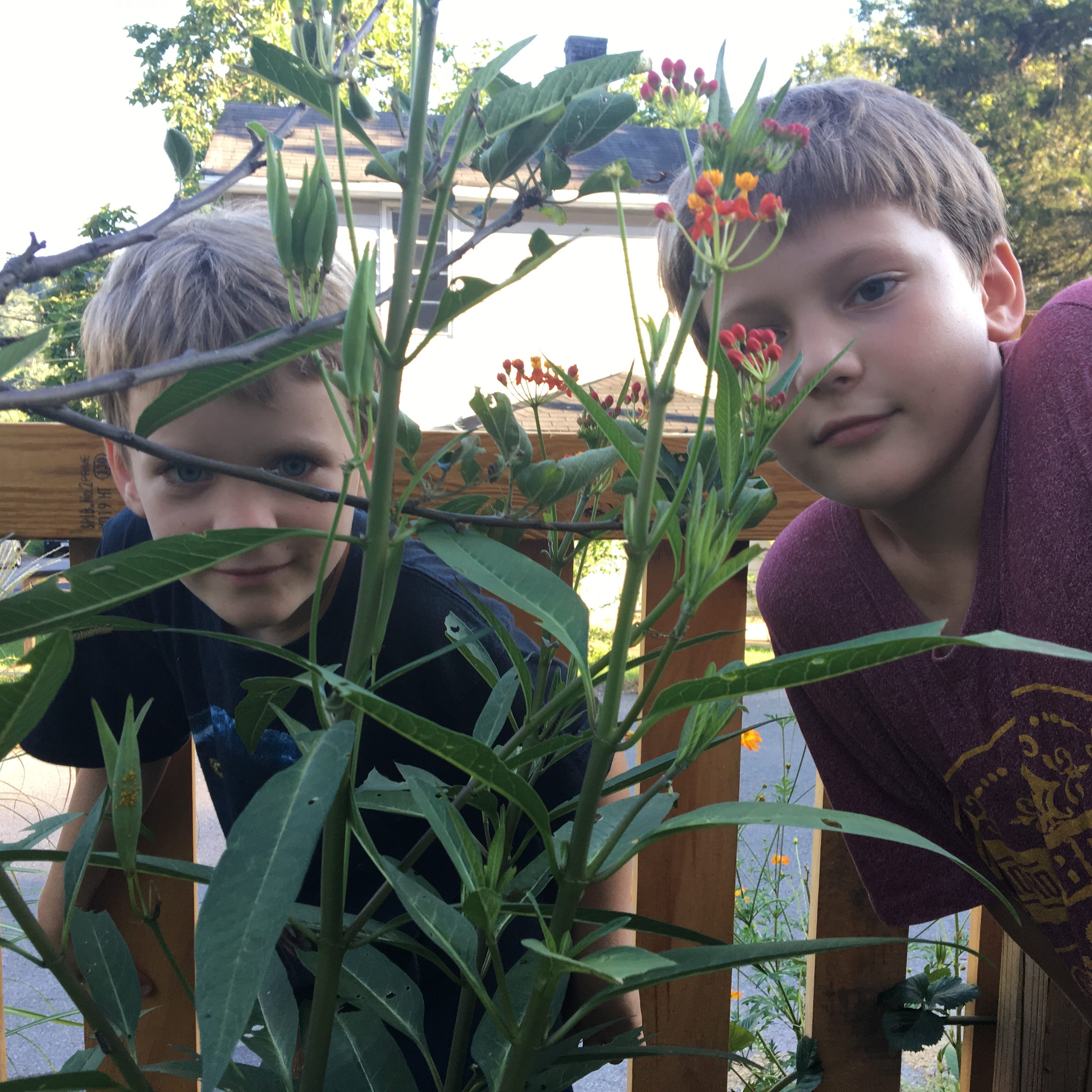 Staunton family nurtures monarch butterflies