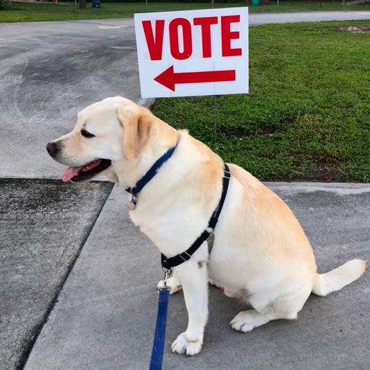Blue supports voting