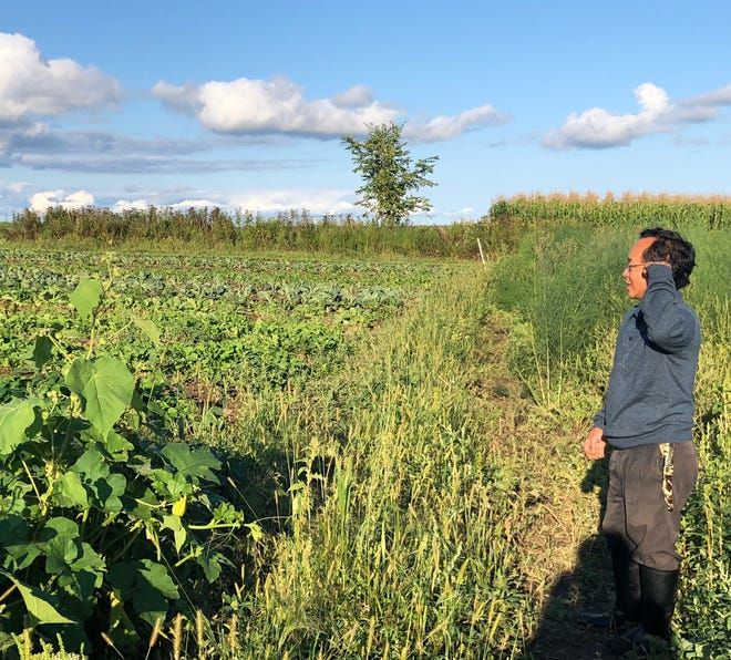 Tong Lee looks out over his fields of produce