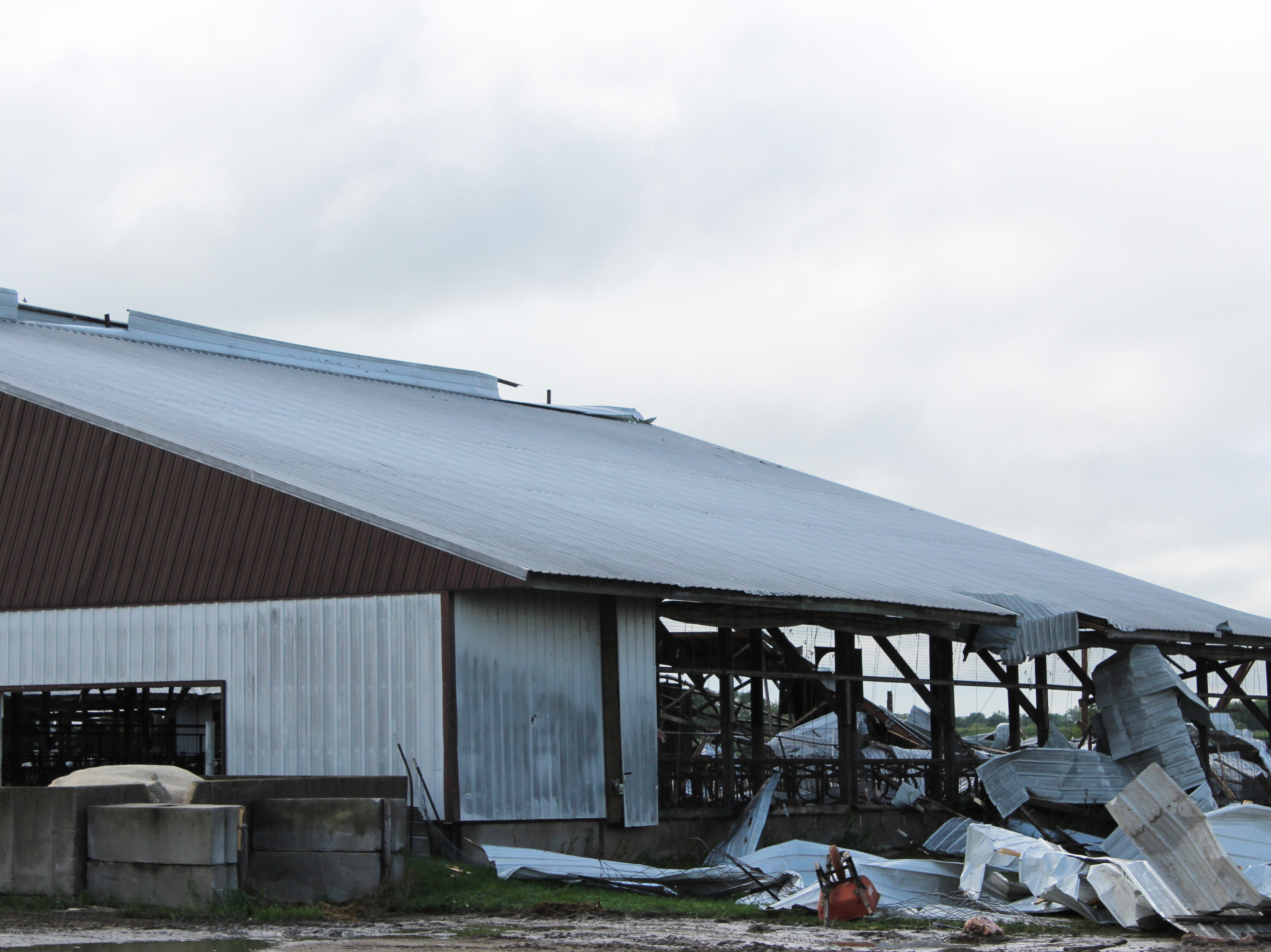 The Wetzel family lost over two dozen dairy cows following a tornado that struck their farm on July 28.