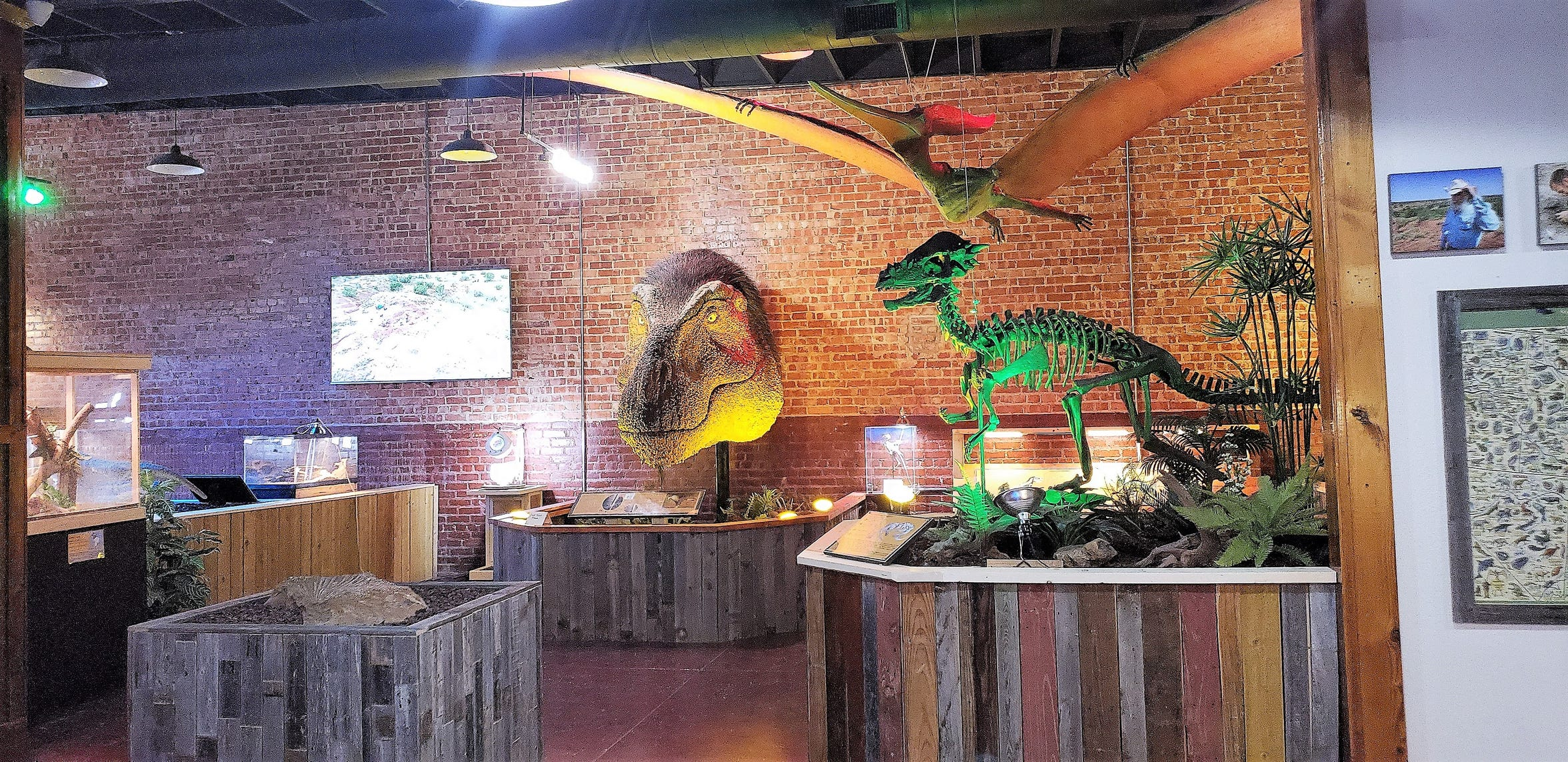 The museum features some familiar dinosaurs as part of its exhibits which were not from the Permian. The dramatically-lit green specimen, for example, is a pachycephalosaurus, which lived 70-66 million years ago, as opposed to the 290 million years ago of the Permian.