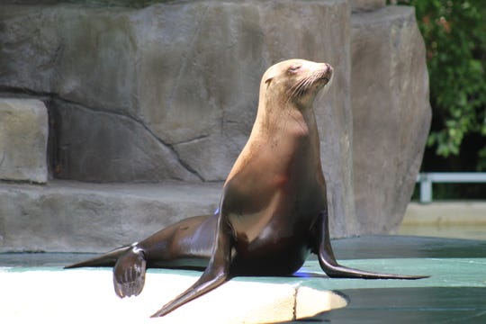 Pupper, an elderly female sea lion, died at the Blank Park Zoo on Thursday. She was 29.