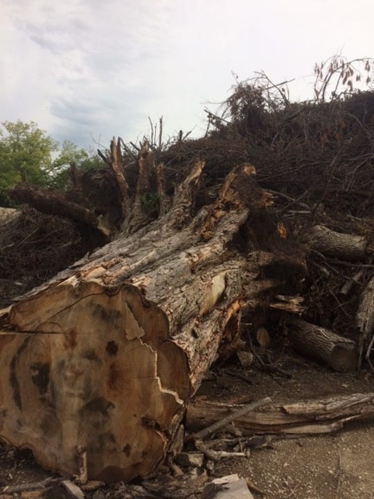 This massive tree stump was removed by city crews within hours after the June 28 storm.