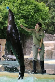 Pupper, who died Thursday at the Blank Park Zoo, starred in shows at the seal and sea lion exhibit.