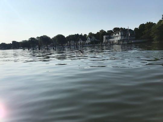 Nick Hobson is seen swimming ahead of his Lake Michigan swim.
