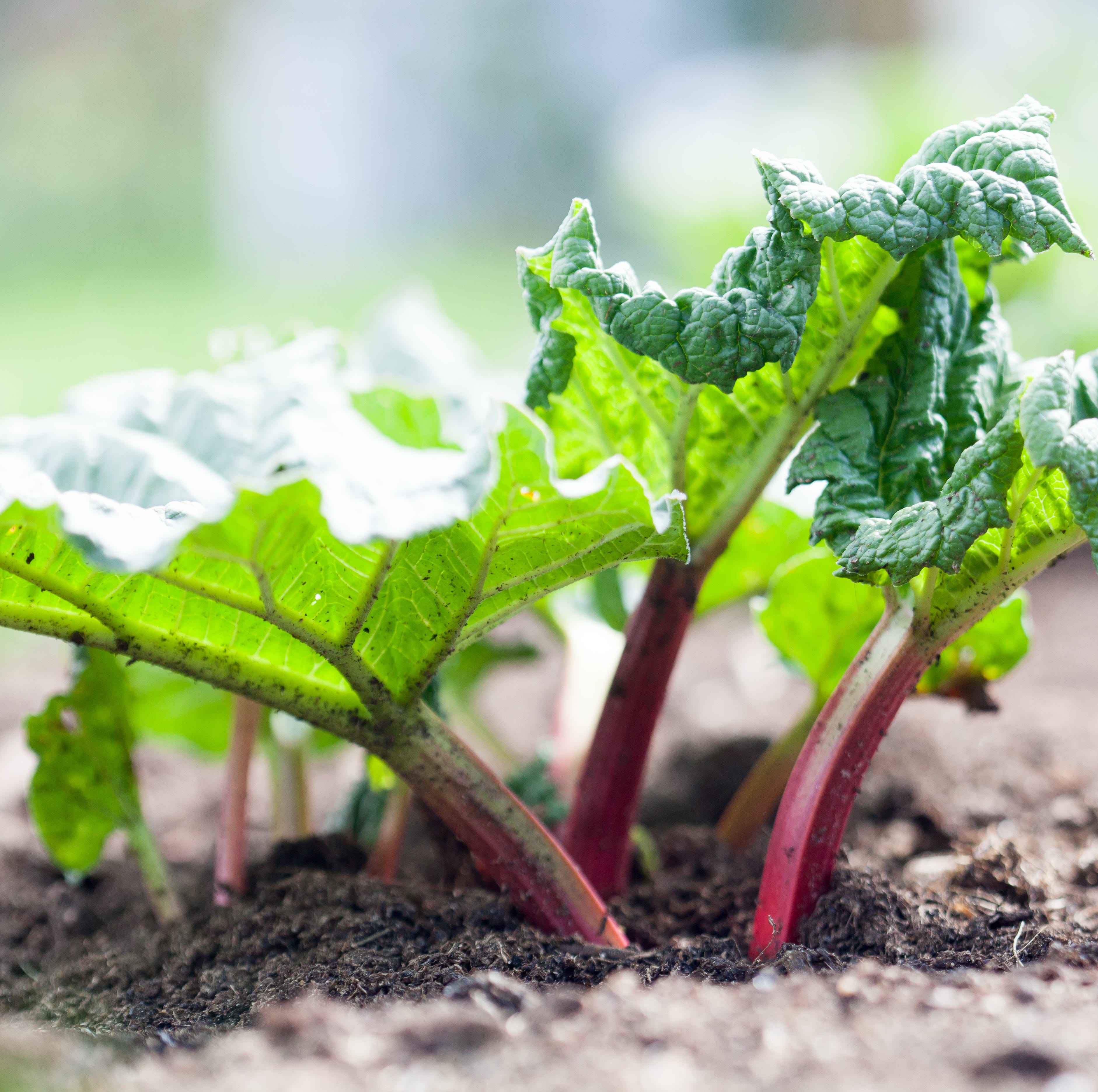 10 vegetables that can kill you if they're not prepared properly