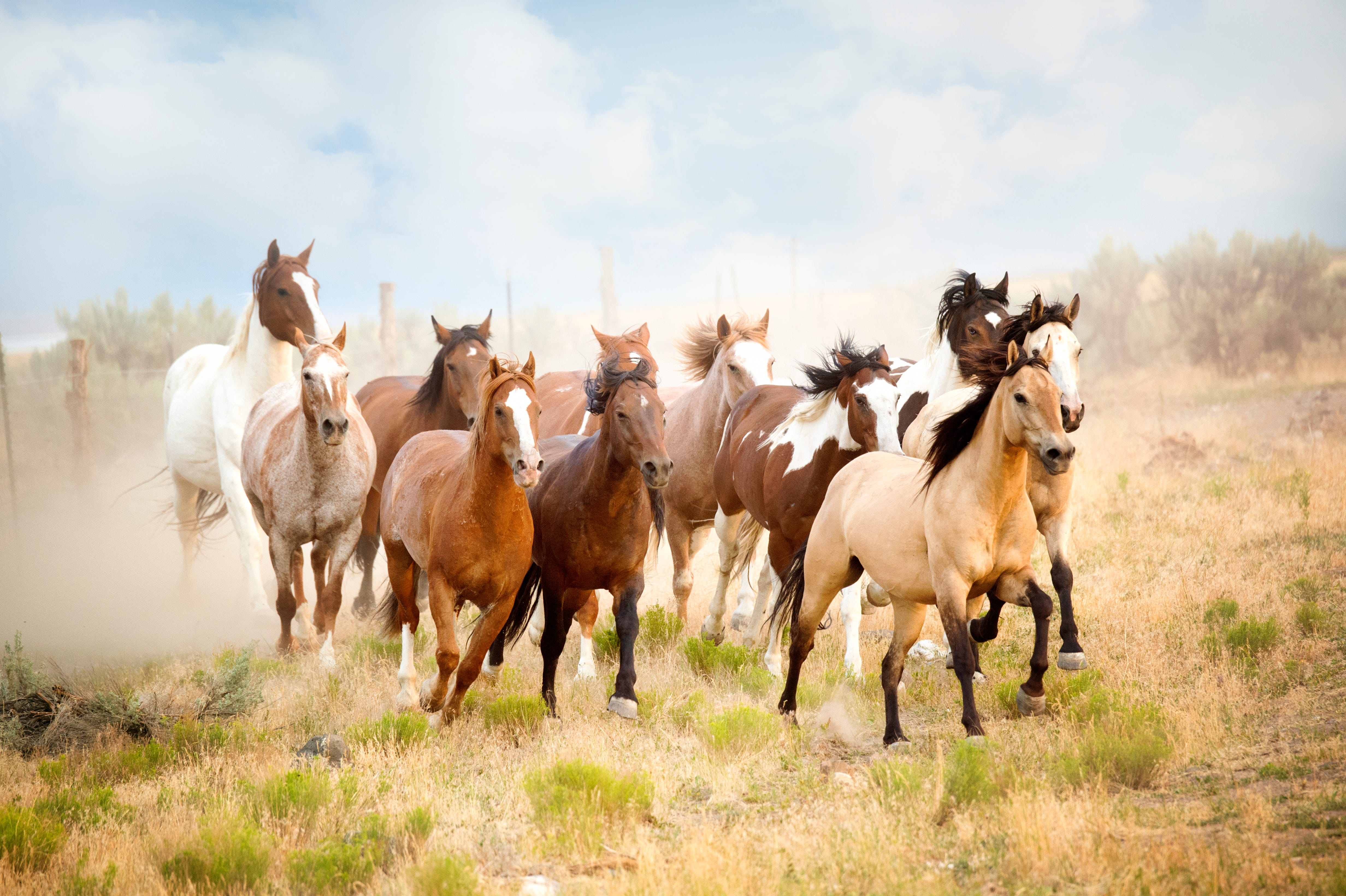 California Wild Horse Round Up Stirs Slaughterhouse Fears