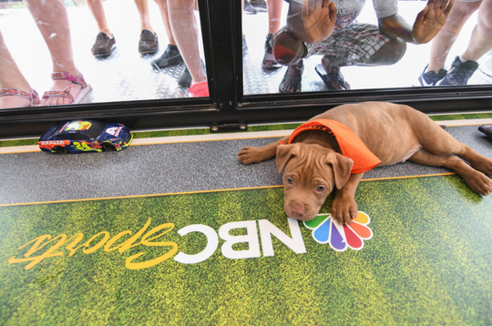 Adoptable puppies with NASCAR-themed names will race on Monument Circle Sept. 6-8.