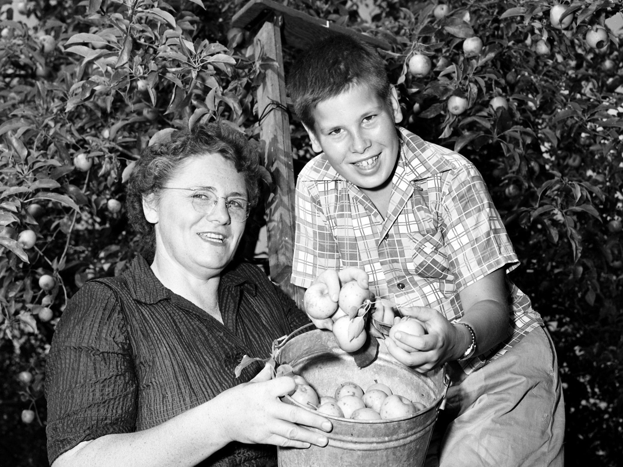 Mr. and Mrs. Burt P. Johnson acquired 20 apple trees in the bargain when they bought their home at 393 Colonial Road. Here, Mrs. Johnson and son Richard display one of the many pails of apples they picked from the trees in August 1953.