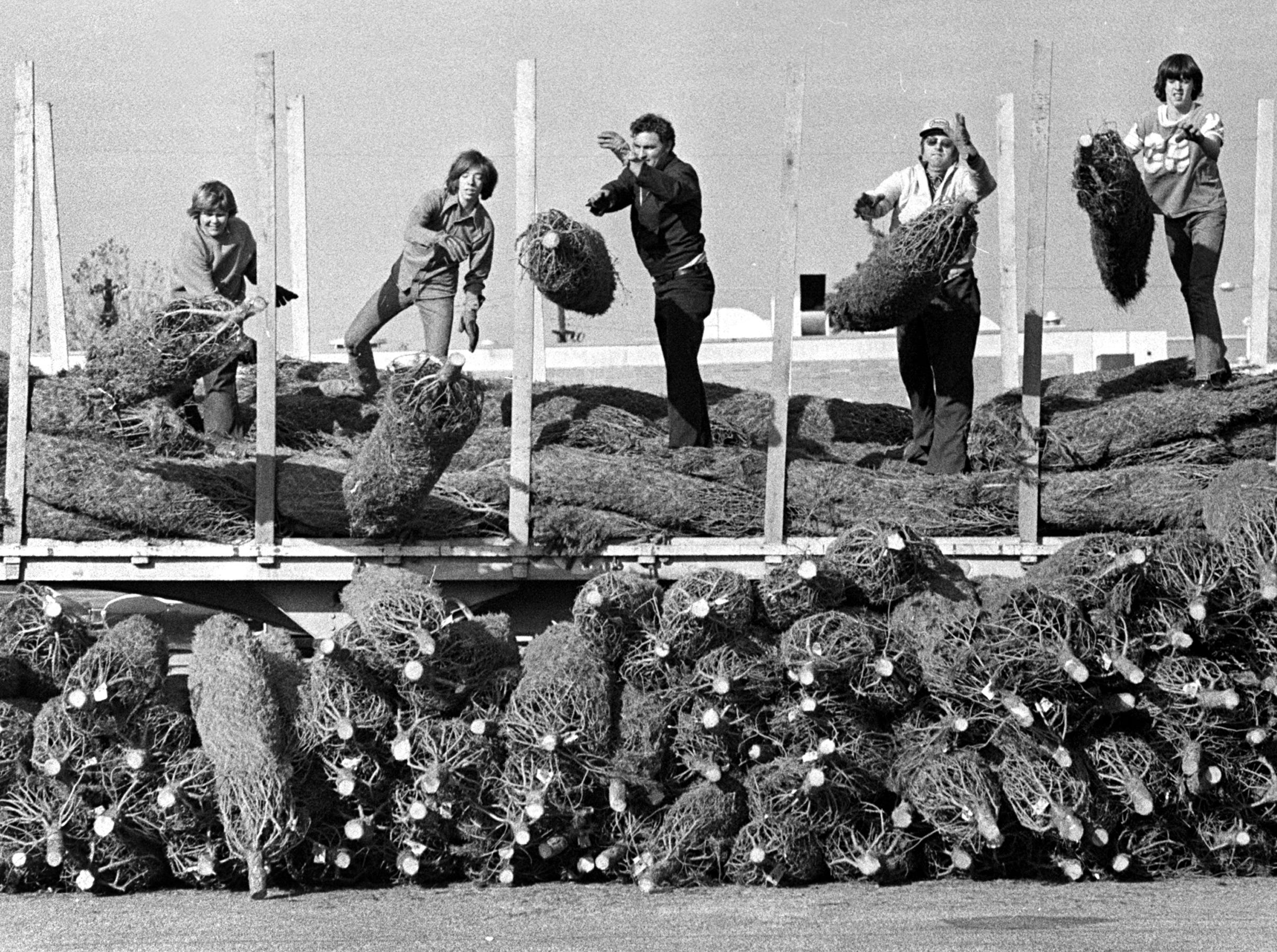 Whitehaven Optimists Club members (from left) Steve Poe, Bill Lamb, Virgil Inman, Art Smith and Steve Smith unload Christmas trees on Nov. 29, 1974. The club will sell the trees in Whitehaven Plaza.