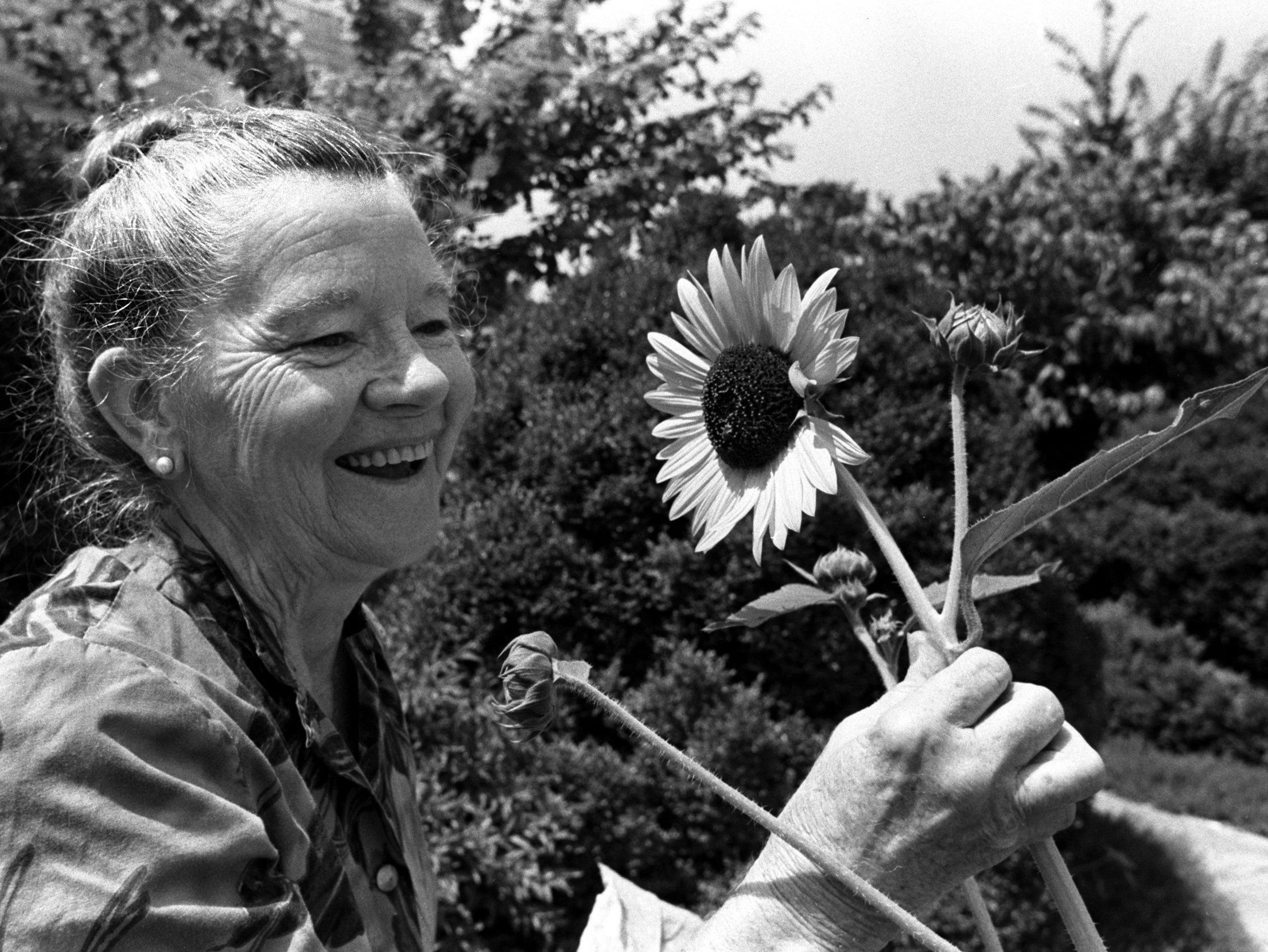 Mrs. Birdie Edwards admires one of the sunflowers in front of her house at 1283 Peabody Avenue on 29 June 1979.  She began growing the flowers three years ago for the small birds, but now she has a row almost all the way across her yard.  In fact, she says she has enough seeds for everyone on Peabody to have sunflowers if they like.