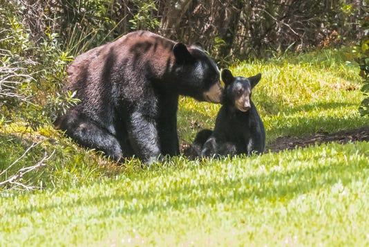 2017 08 21 Three Bears 18056