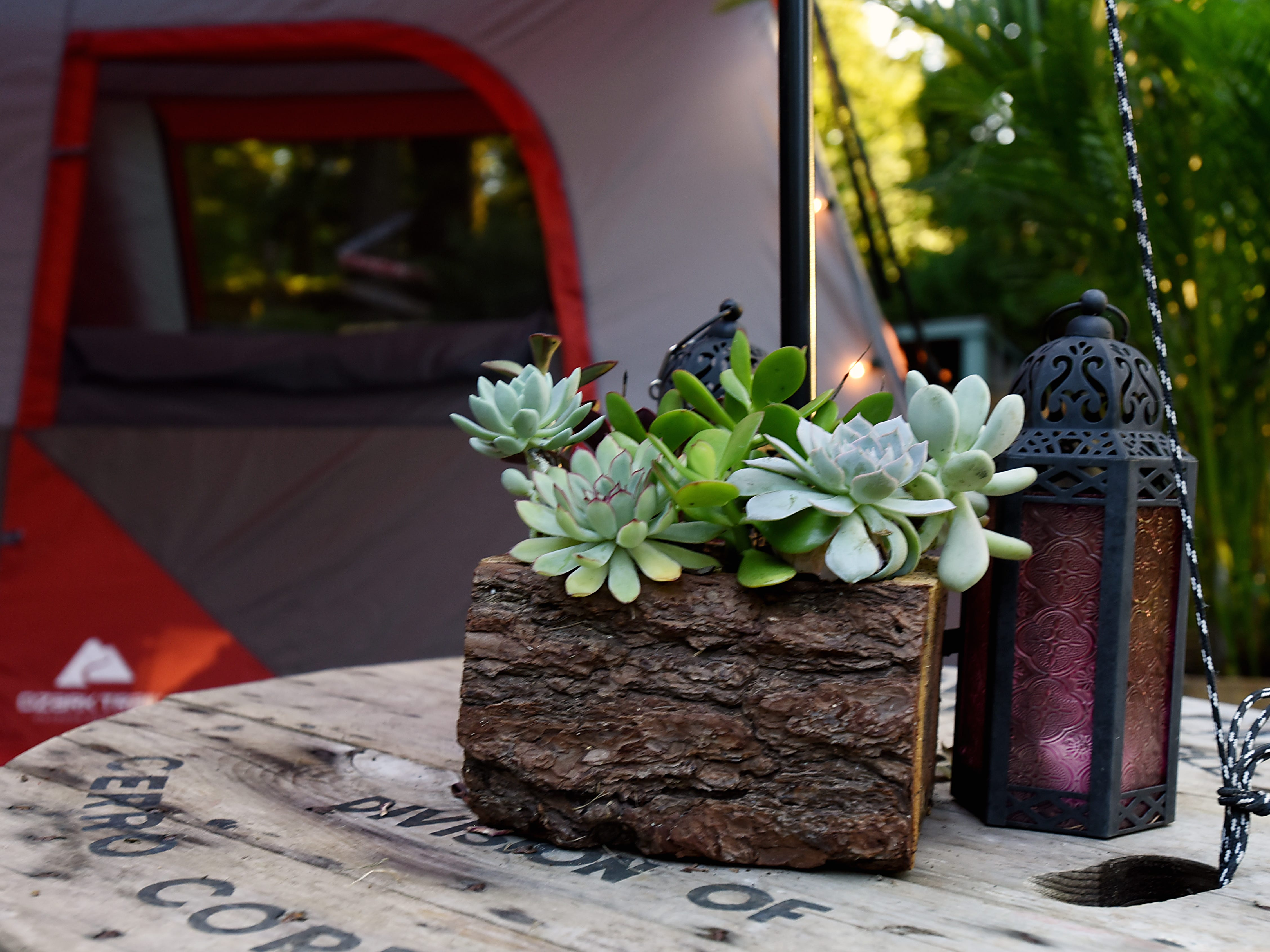 Melissa Ricapito and Mark Pyrka decide to rent out a tent in their backyard on Airbnb as a joke, much to their surprise it's been a hit. The tent rental allows access to all the backyard amenities the West Milford home has to offer. Succulents by the tent exterior shown on Thursday August 30, 2018.