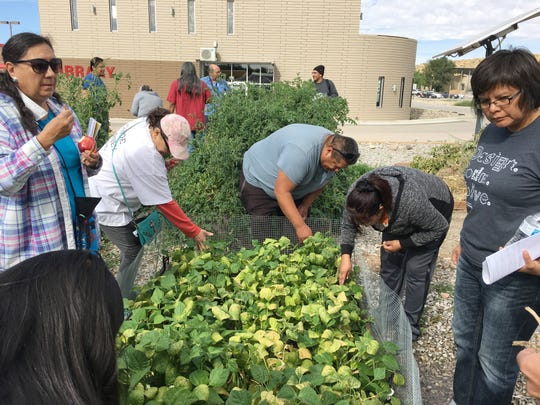Participants in a workshop about seed saving collect tomato and bean seeds on Friday at Navajo Technical University in Crownpoint.