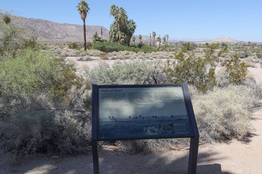 The Oasis of Mara is part of Joshua Tree National Park in Twentynine Palms, August 31, 2018.